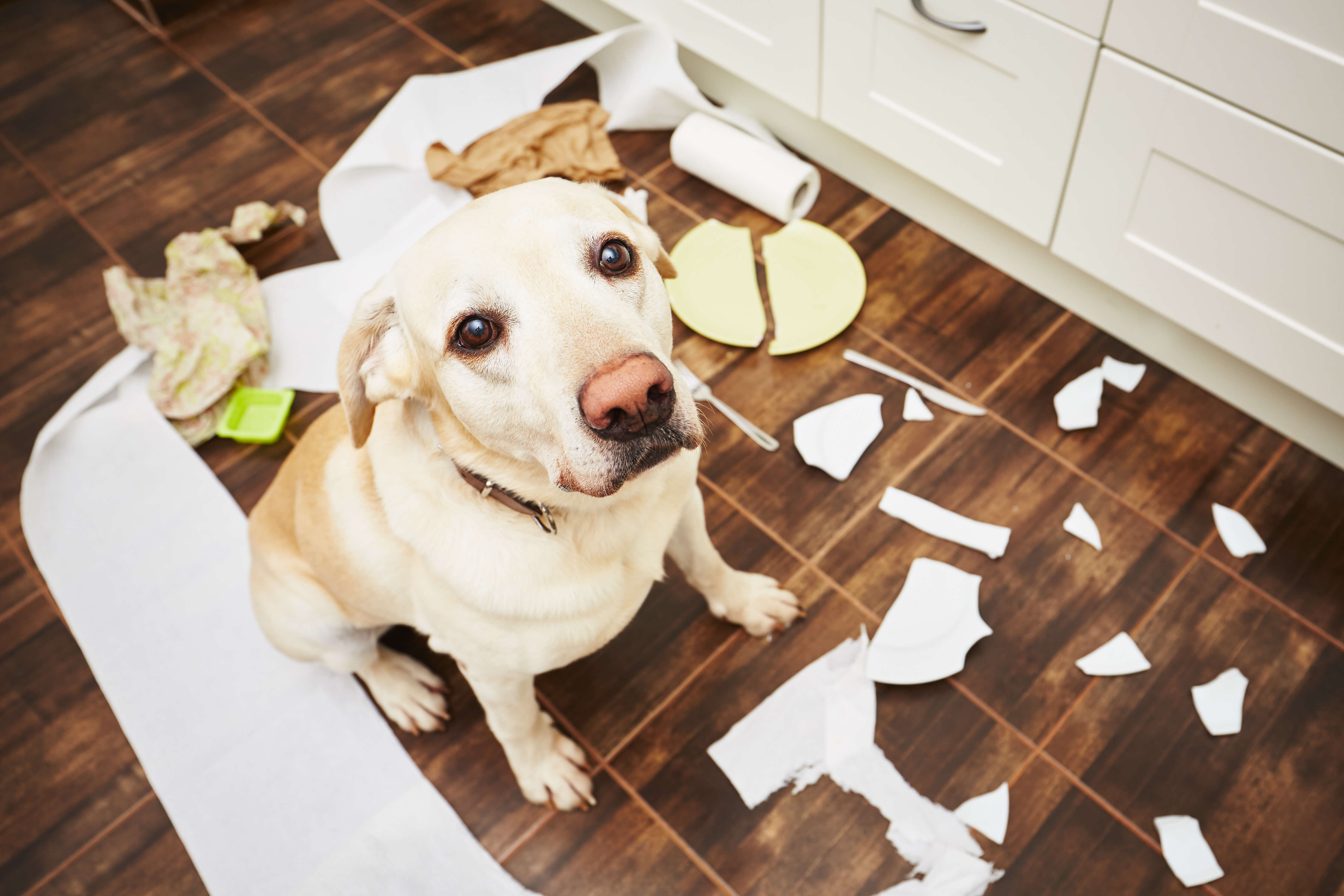 Dogs can present us with all types of unwanted behaviors.
